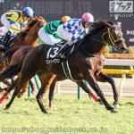 次走の狙い馬(2月11・12日 美浦組)