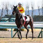 次走の狙い馬(2月3・4日 栗東組)