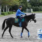 今野光成 9月29日の推奨馬