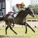 次走の狙い馬(10月20・21日 美浦組)