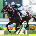 次走の狙い馬(11月3・4日 栗東組)