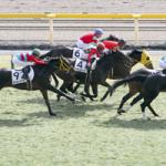 次走の狙い馬(2月10・11日 美浦組)