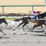 次走の狙い馬(2月2・3日 美浦組)