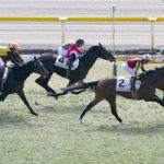 次走の狙い馬(2月17日 美浦組)