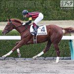 次走の狙い馬(12月7・8日 栗東組)