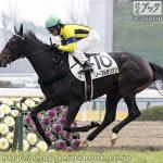 次走の狙い馬(12月28日 美浦組)