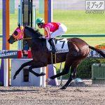 次走の狙い馬(10月24・25日 栗東組)