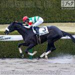 次走の狙い馬(12月19・20日 栗東組)